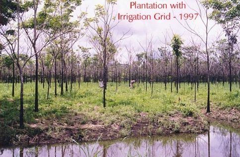 Plantation with irrigation grid, 1997